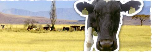 ZuidAfrika of Friesland